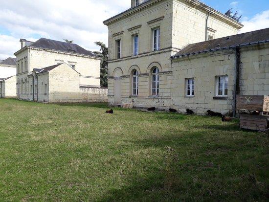 Roiffe, Prancis: Les moutons et le lama au repos le long des pavillons (vus  de derrière)