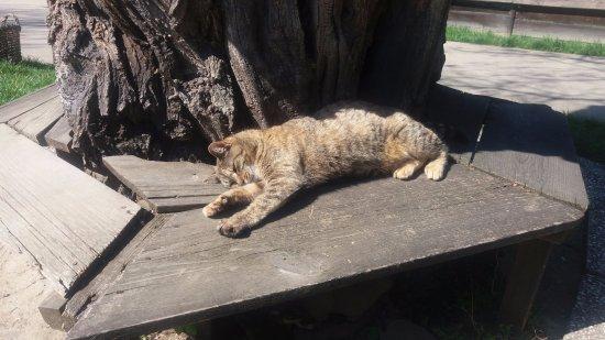Village Museum (Muzeul Satului): Cats everywhere :)