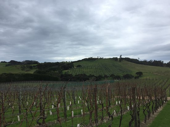 Waiheke Adası, Yeni Zelanda: Wine in the Vines