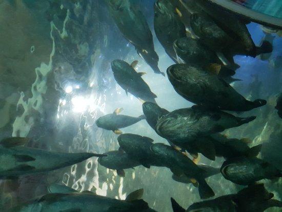 Manly Sea Life Sanctuary: 20170818_092746_large.jpg