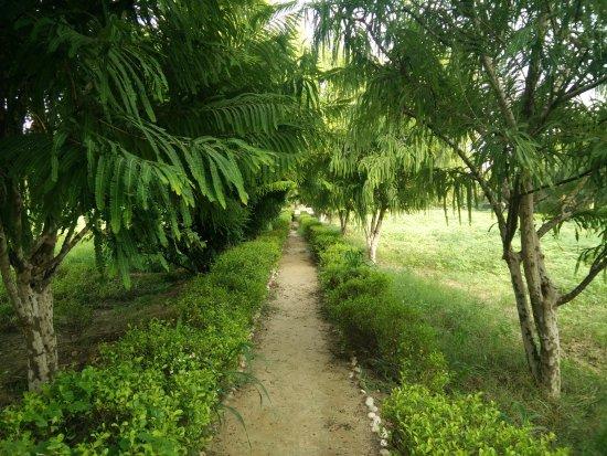 Trident, Agra: Walk in the Vegetable / Herbs garden