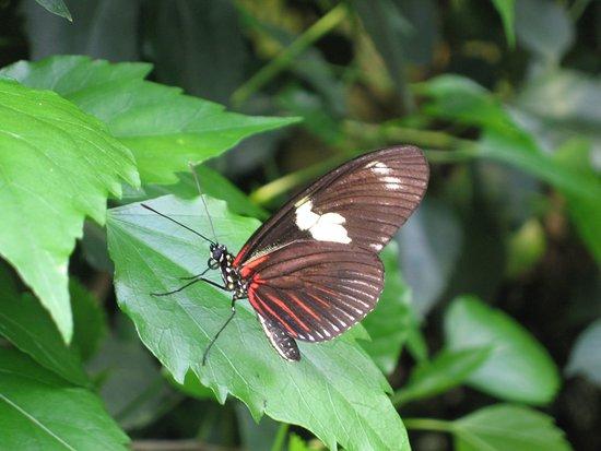 Schmetterlingspark Klutz