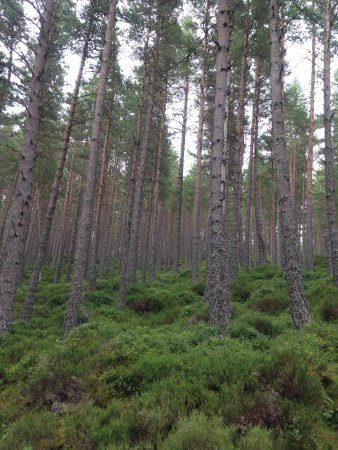 Aviemore, UK: Allt-mor, Forestry commission walking trails