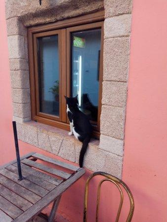 Gennadi, Griechenland: коты везде