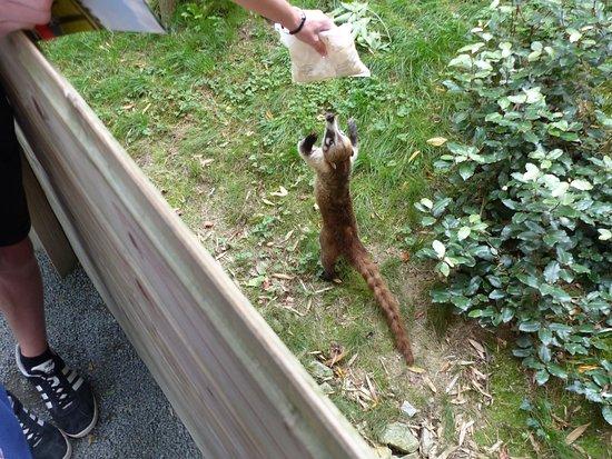 Zoo La Boissière du Doré: Ne pas nourrir les animaux, mais jouer avec... oui !