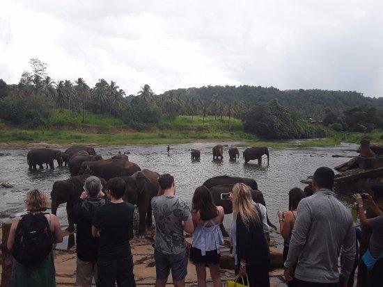 Tangalle, Sri Lanka: Pinnawalla SRILANK