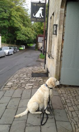 Eynsham, UK: Oscar copying the pub sign