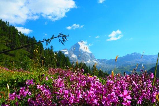 Valtournenche, Italia: Fiori alla digadi Cignana