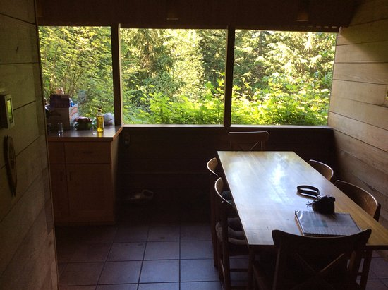 Deep Forest Cabins at Mt. Rainier : View of the Forest from the kitchen area