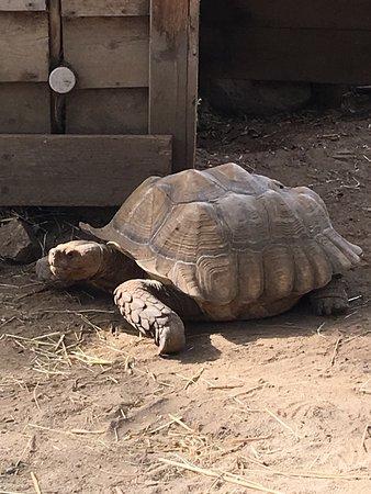 Photos des tortues de Sorede