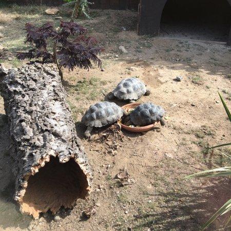 Sorede, فرنسا: Photos des tortues de Sorede
