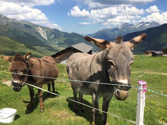 Sedrun, Switzerland: photo5.jpg