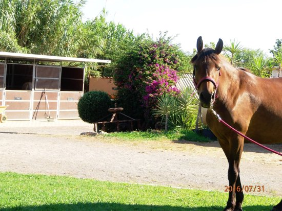 Tavira Horse Riding Quinta Beldade Stables