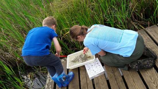 Hinchingbrooke Country Park: Snails, leeches, pond skaters and more