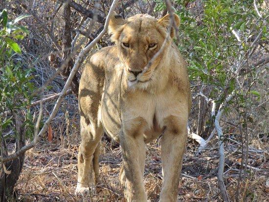 Kambaku Safari Lodge: photo6.jpg