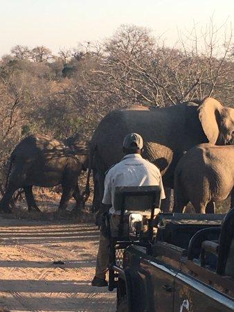 Kambaku Safari Lodge: photo7.jpg