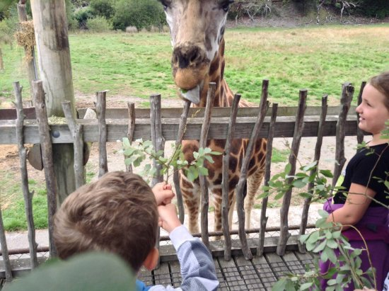 zoo coronavirus, <b>With humans on lockdown, zoo animals are still waiting for new guests</b>