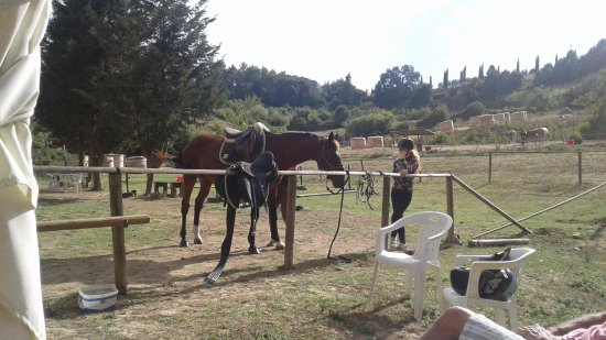 Cevoli di Lari, Italy: Un cavallo in preparazione