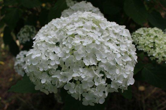 Kubota Ajisai Garden