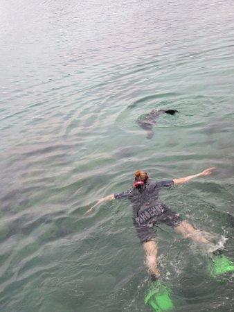 Puerto Villamil, Ecuador: partner met zeeleeuw