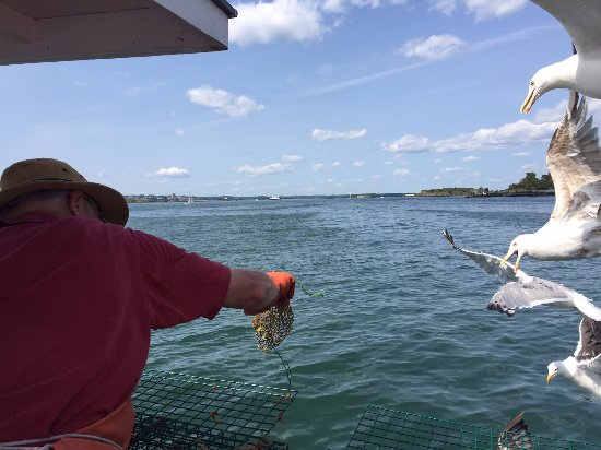 Lucky Catch Cruises: Emptying a bait bag