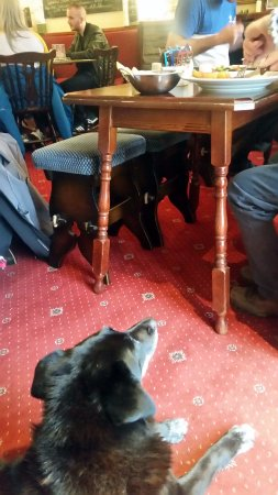The White Stag: The pub's dog hung out with whoever ordered steak, which was hilarious