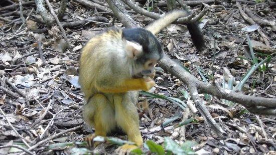Monkeyland Primate Sanctuary: photo1.jpg