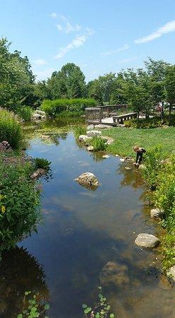 Blacksburg, VA: Koi habitat