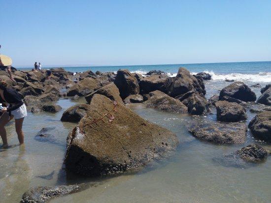 Coronado, CA: Tide pools