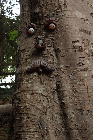 faces on Summerhill glen tree