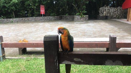Santa Elena, Costa Rica: photo3.jpg