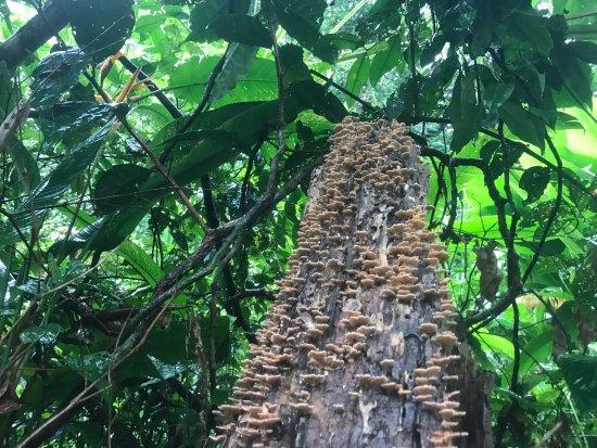 Tortuguero, Kosta Rika: photo6.jpg