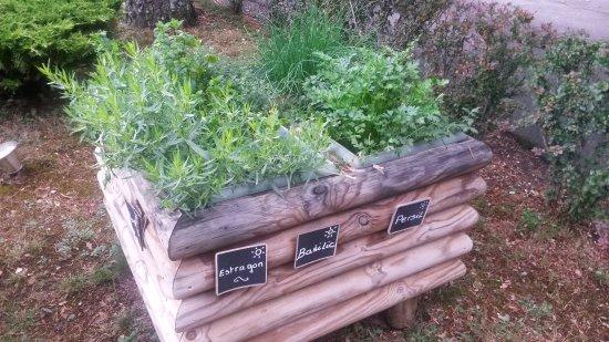 Chaudes-Aigues, France: Herbes aromatiques