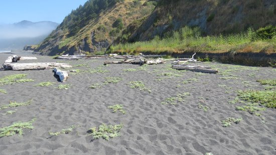 Shelter Cove, CA: Driftwood