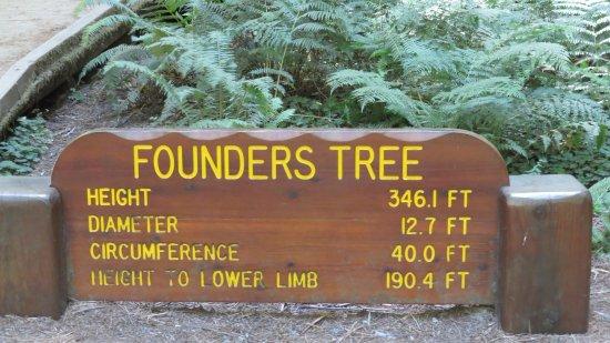 Weott, CA: Size od the Founders Tree