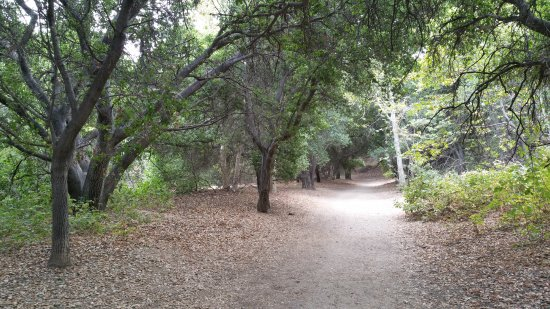 San Fernando, CA: Trail thru the oak trees