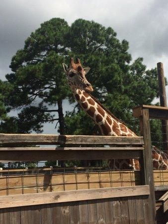Zoo World Panama City Beach Reviews
