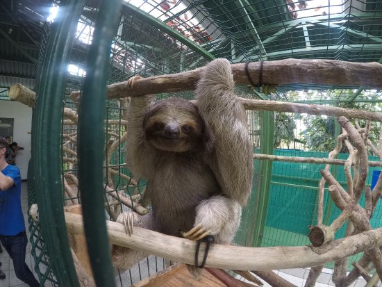 Sloth Sanctuary of Costa Rica