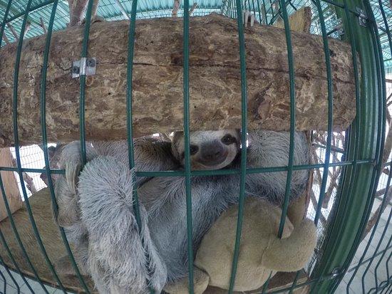 Sloth Sanctuary of Costa Rica 사진