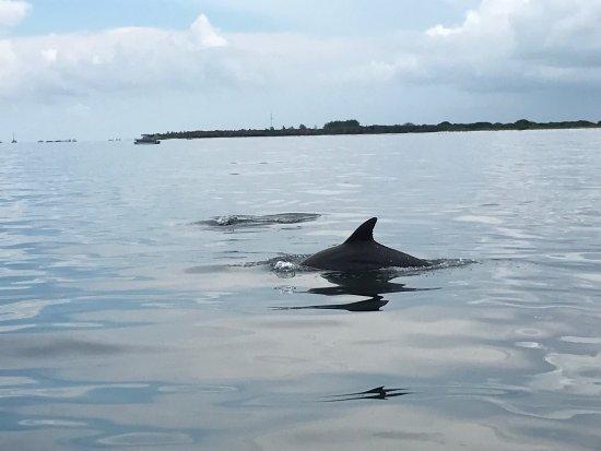 Holmes Beach, FL: Nature Coast Excursions