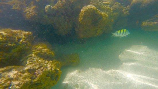 Ilha de Boipeba, BA: photo0.jpg