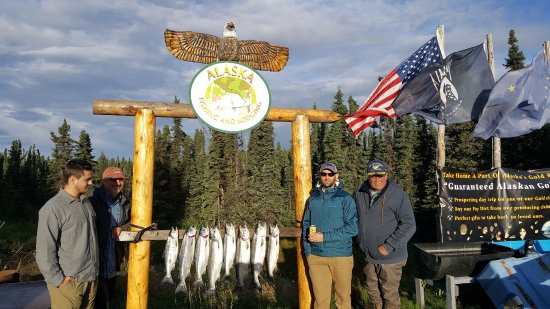 Alaska Fishing & Lodging: Second day of fishing on the Kenai. LImited in 2 hours. Good thing as it was about 40 degrees on