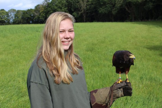 Cumberland Bird Of Prey Centre: Lauren out in the fields with Buzz