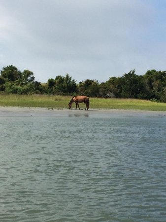 Beaufort, NC: Lone Horse snackin sea grass