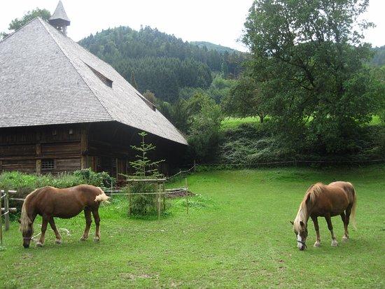 Gutach im Schwarzwald, Germania: Horses in the yard