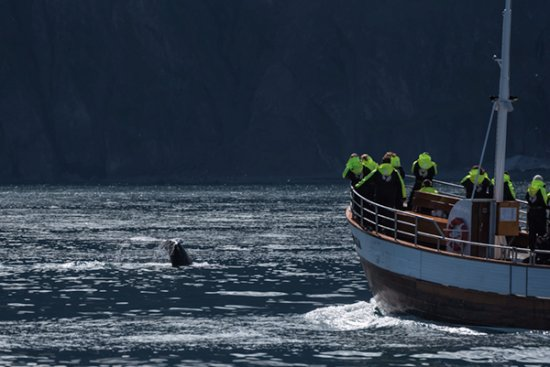Husavik, أيسلندا: balena ed osservatori
