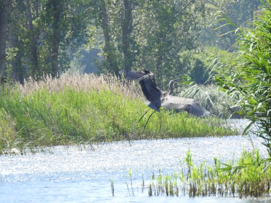 Port Rowan, Canadá: A chance to see the wildlife up close.