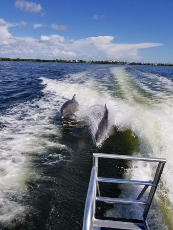 Cortez, Флорида: Dolphins playing behind the boat!