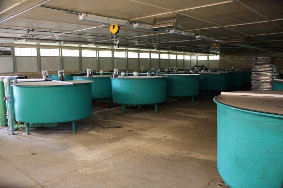 McNenny State Fish Hatchery
