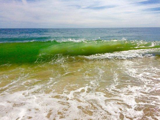 Coast Guard Beach: photo7.jpg